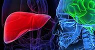 Liver Brain